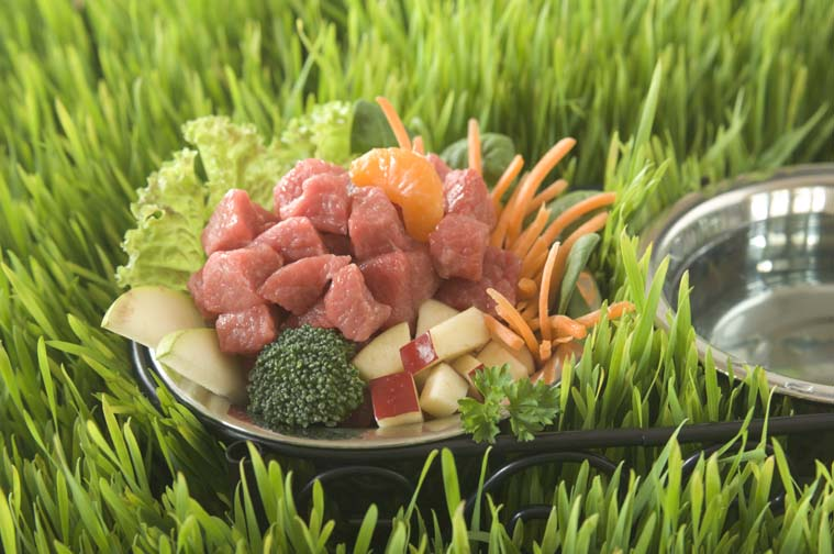 barf diet the battle of raw vs cooked pet food